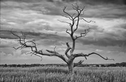 Skeleton tree at Snape