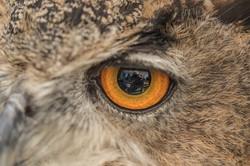 Ive got my eye on you
