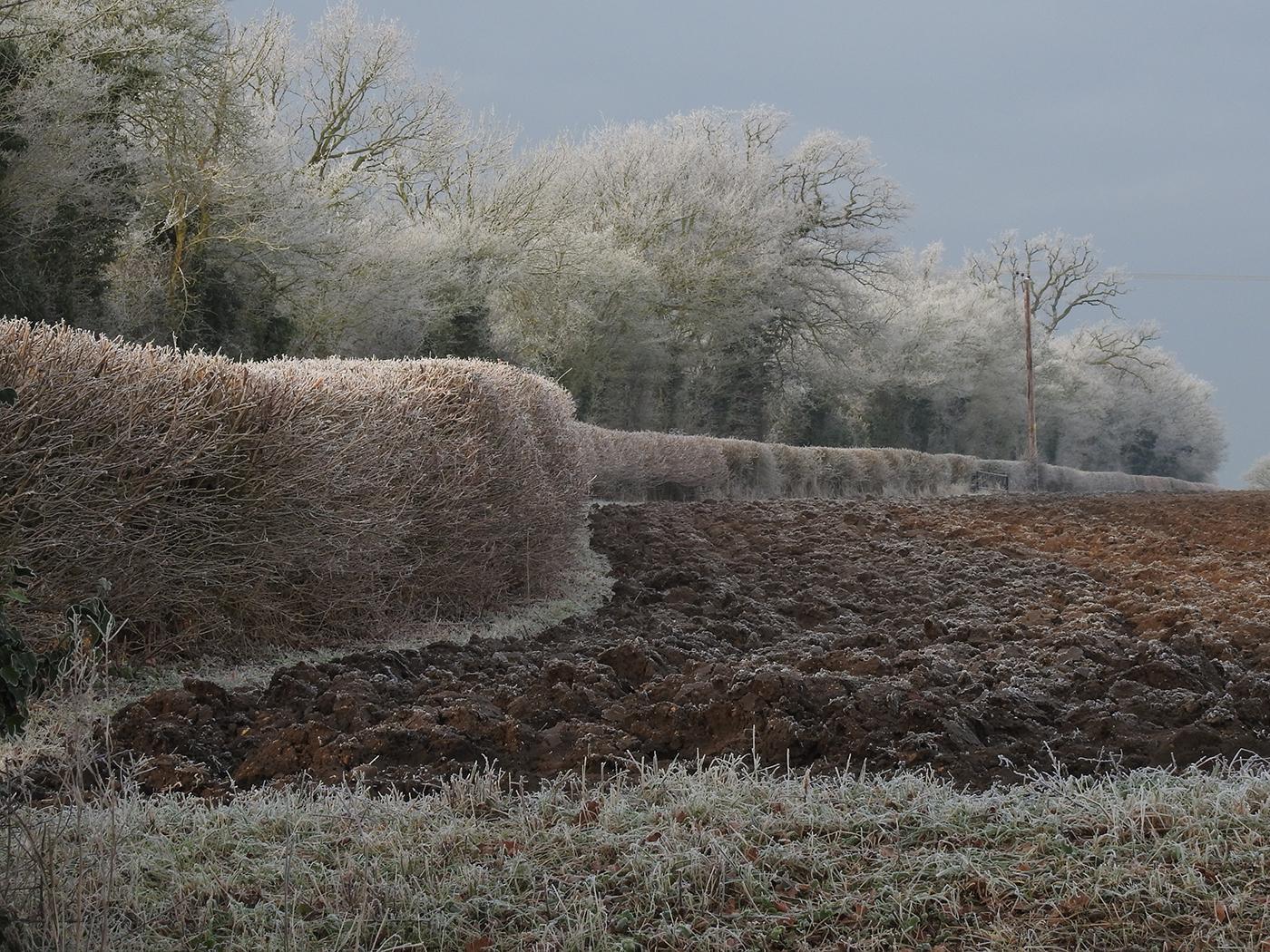 Winter Landscape (Pakenham)