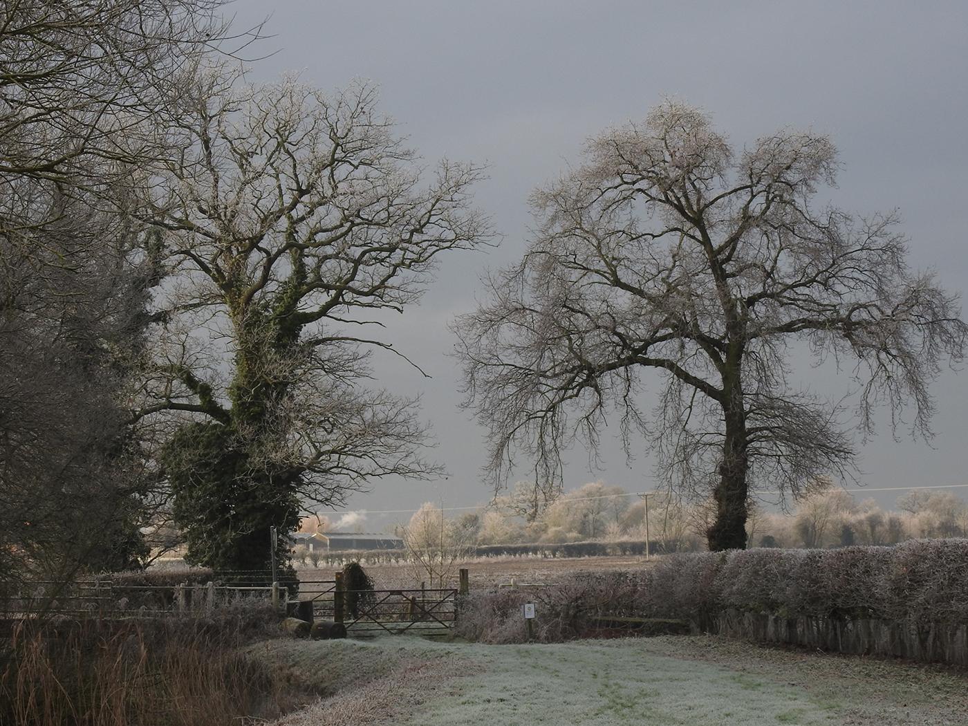 A Winter's Walk - Sandy Jackson