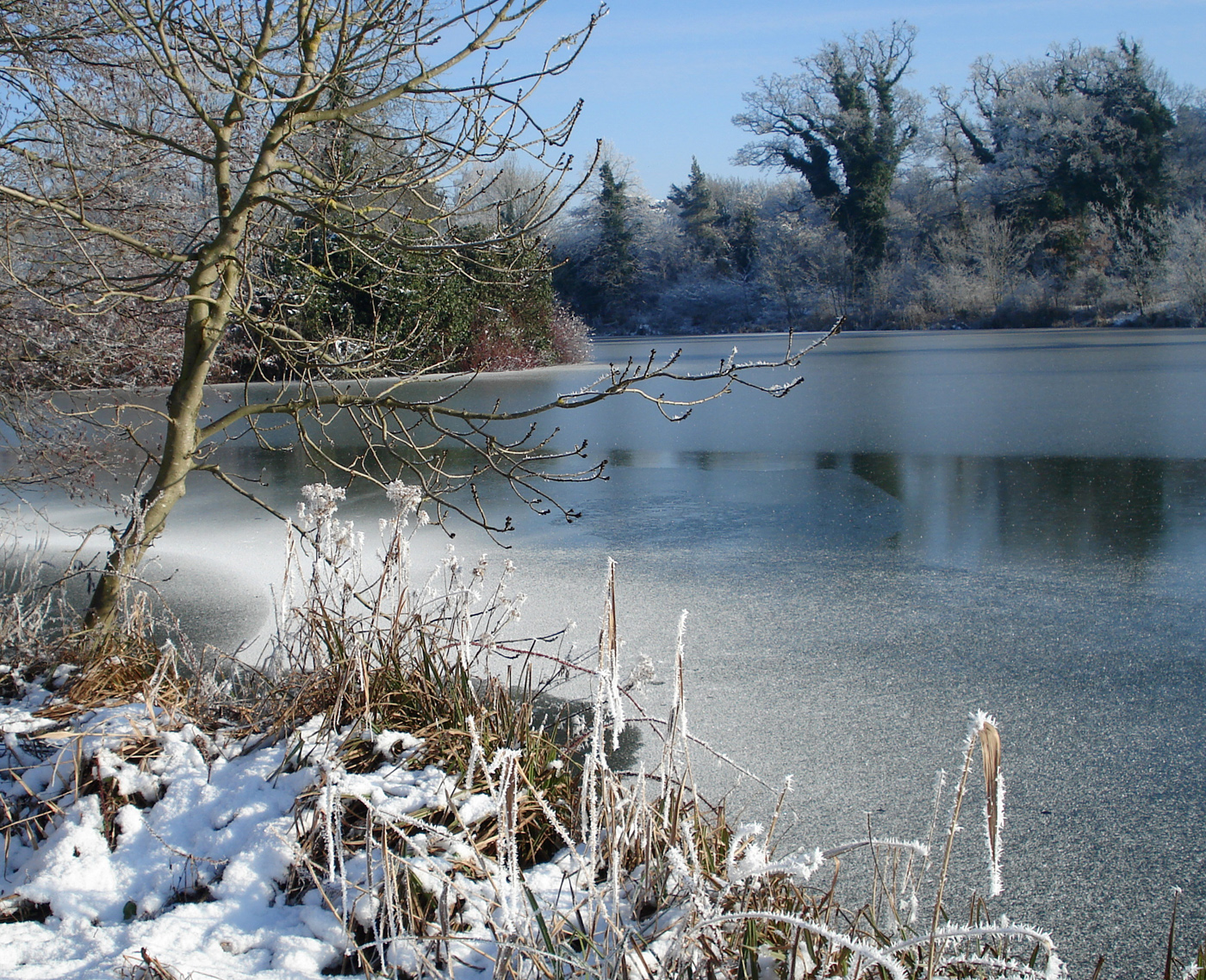 Culford Lake in the snow