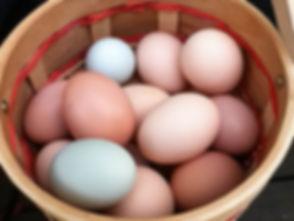 eggs (1 of 1).jpg