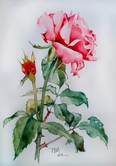 timstudio-floral