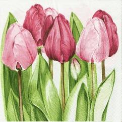 colorpencil floral