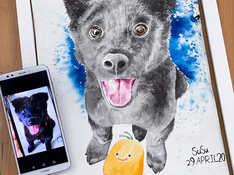 pet drawing pet painting course