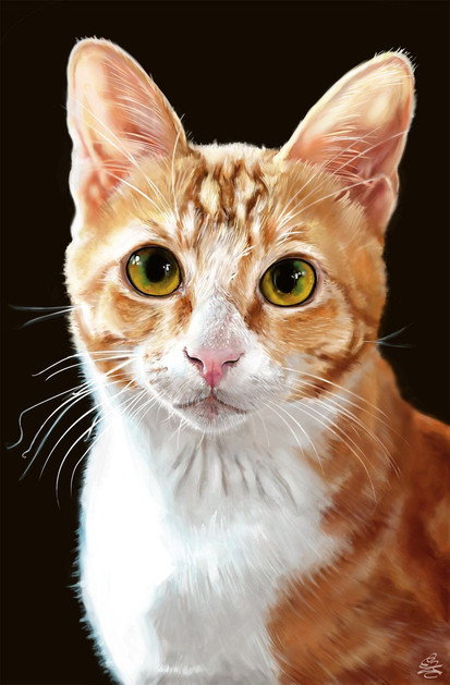 oil painting pet-cat on canvas