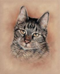 pet-cat colorpencil drawing