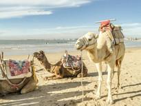 Essaouira-Morocco-camel