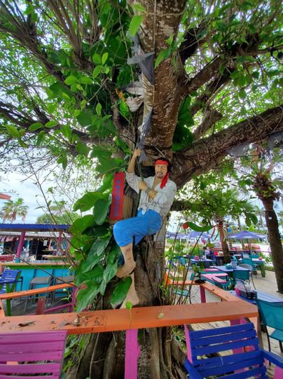 back pirate in tree.jpg