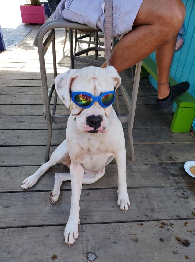 cool dog.jpg