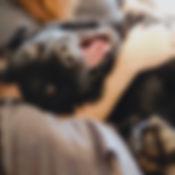 cat sitting san antonio metro pup sa dog walking happy dog