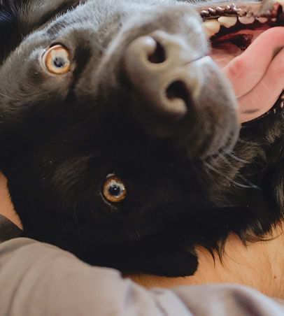 Mignon Happy Dog