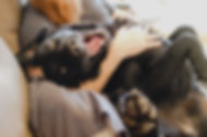 かわいい幸せな犬