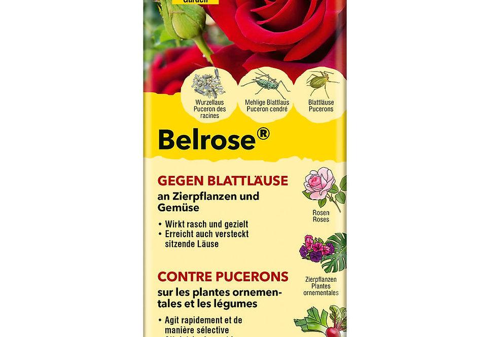 Belrose gegen Blattläuse
