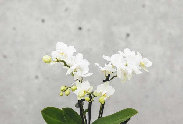 Orchideen minis