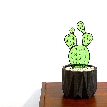 Opuntia Cactus 'Glas & Glas'