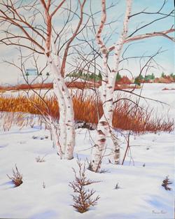 Woodbine Park Birches