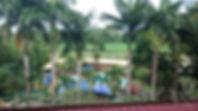 Palmen mit Feld im Hintergrund
