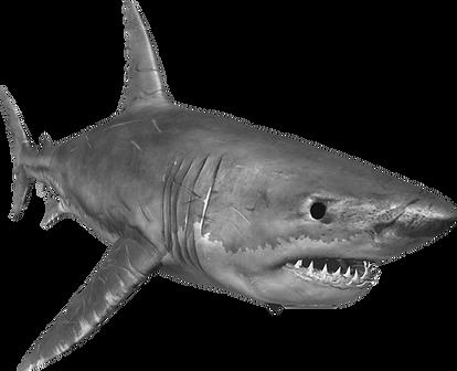 scary-shark-transparent-4.png