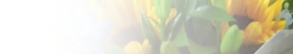 Vases Header Image