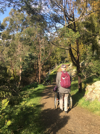 Walk into Punchbowl Reserve