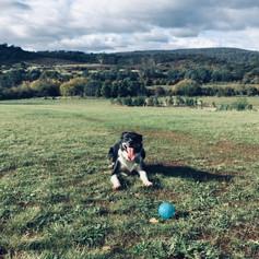 Off leash dog area