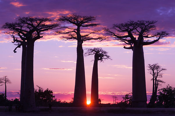 baobab_sunset.jpeg
