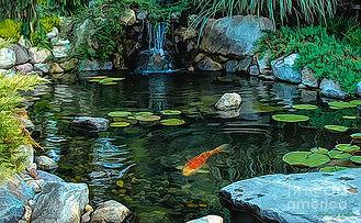koi-pond-walter-colvin.jpg