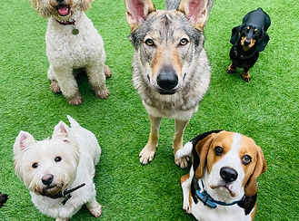 our-liverpool-doggy-daycare.jpg