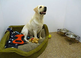 image-dogboarding5.jpg