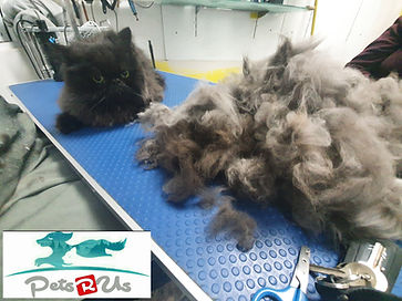 Excees fur removed from cat after cat grooming.