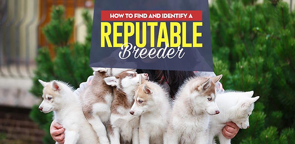 How-to-Find-a-Reputable-Dog-Breeder-Loca