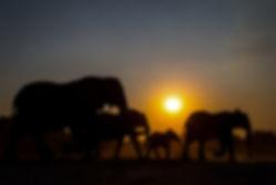 Elephant-Sunset-Web.jpg