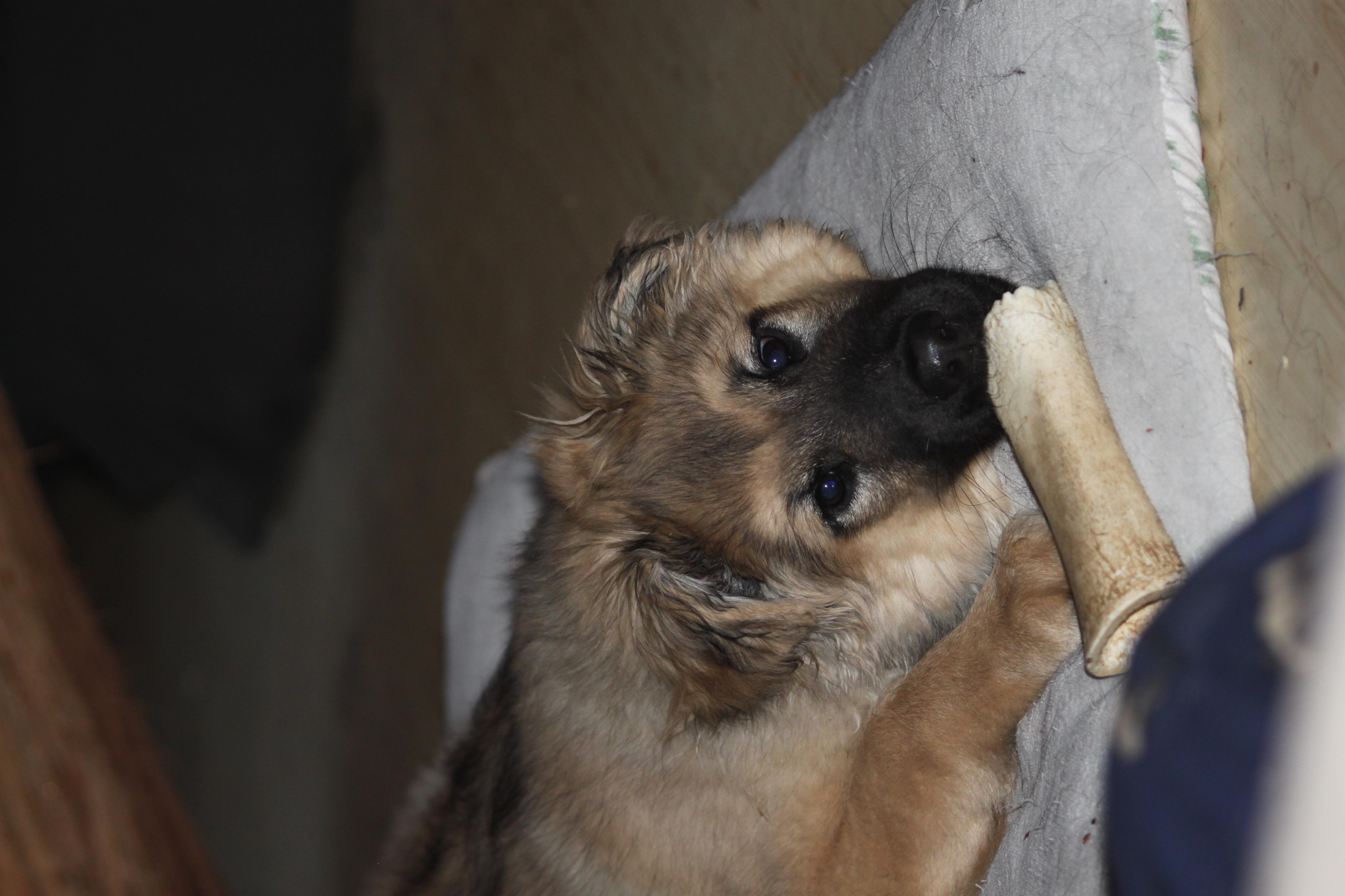 Found a bone