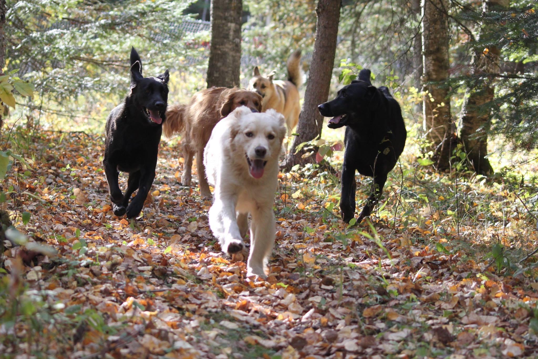 Enjoying an afternoon run
