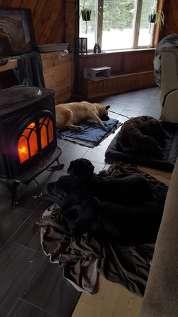 Enjoying some heat after being out