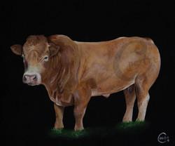 Ians Bull WEBSITE