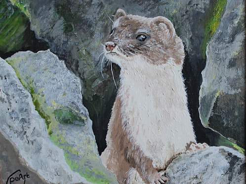 Stoat in the Wall- Limited Edition Print