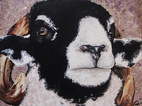 Tup Lamb - Canvas, Art Print