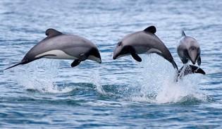 Dolphin Sanctuaries