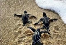 Turtle sanctuaries_edited
