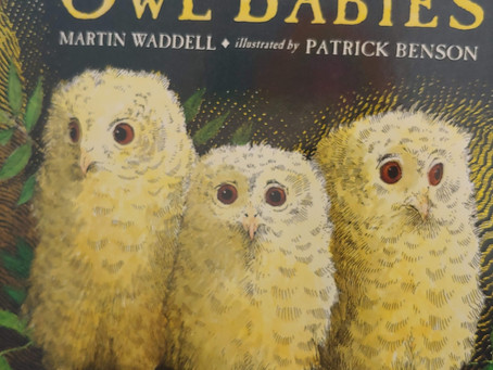 Story Time #3: Owl Babies
