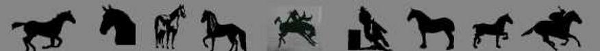 9-horse-composit-image-for-DT-Reflective