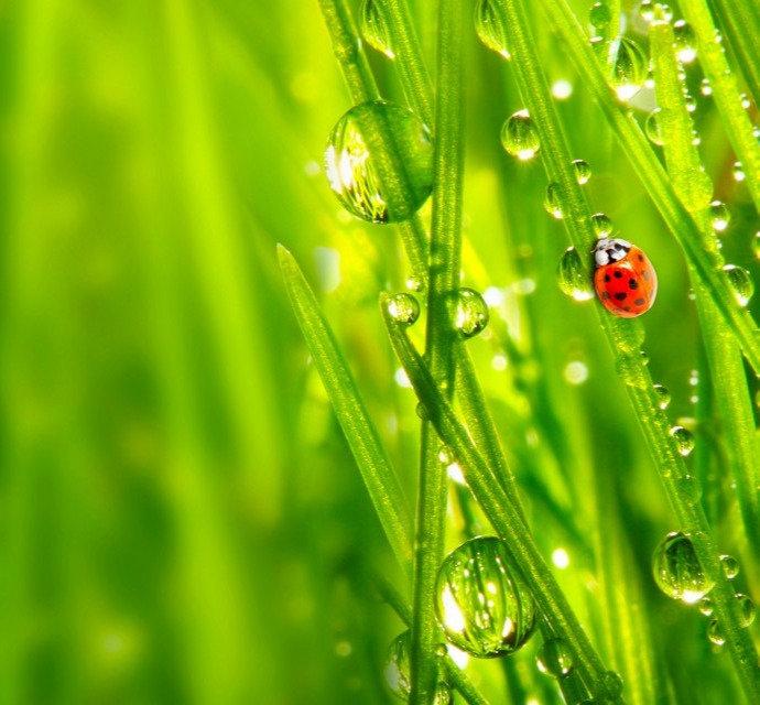 grass-wallpaper-2560-1600-1024x640_edite