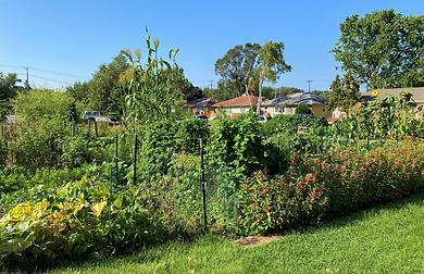 Community Gardens.png