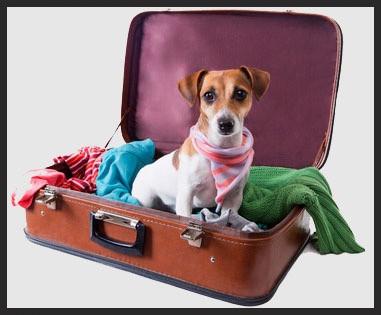 Viajar con animales Clinica Veterinaria Naturia
