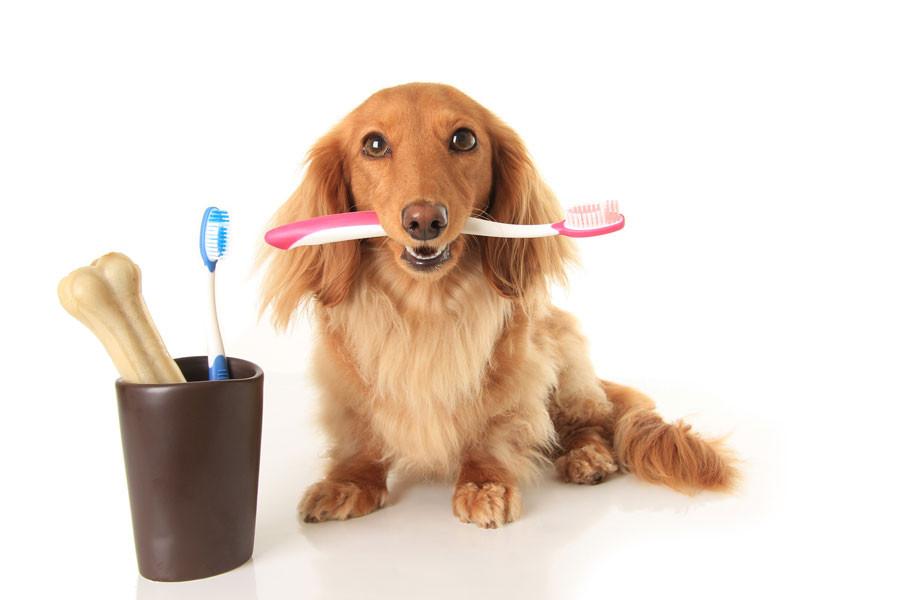Clinica Veterinaria Naturia, cepillado dientes perro