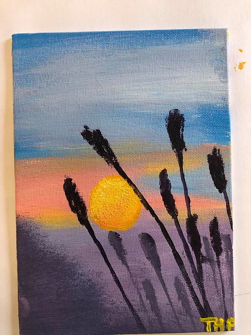 240 Sunset Wheat 5x7