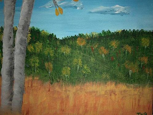 70 Aspens in Meadow 8 x 10