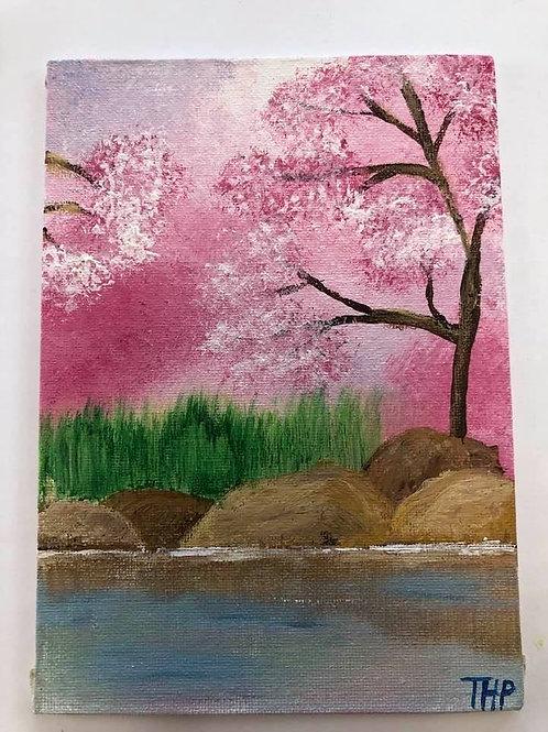 236 Cherry Blossoms 5 x 7